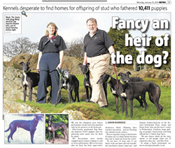 Newspaper article about black Greyhounds