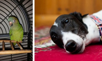 Basil the parrot with Freddie the greyhound