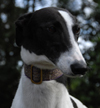 Coral - White & Black Greyhound