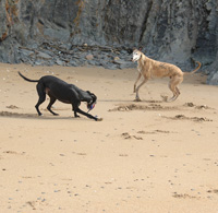 Bobby & Ind - Greyhound playing