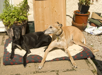 Indi with Sandy in the garden