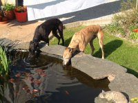 Bobby and Indi having a drink