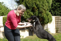 Jenny with black and white greyhound