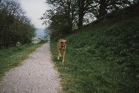 July 1997 - running along side the canal at Gargrave in Yorkshire