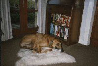 May 1997 - on his sheepskin rug.
