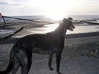 Toby on Rossall Beach